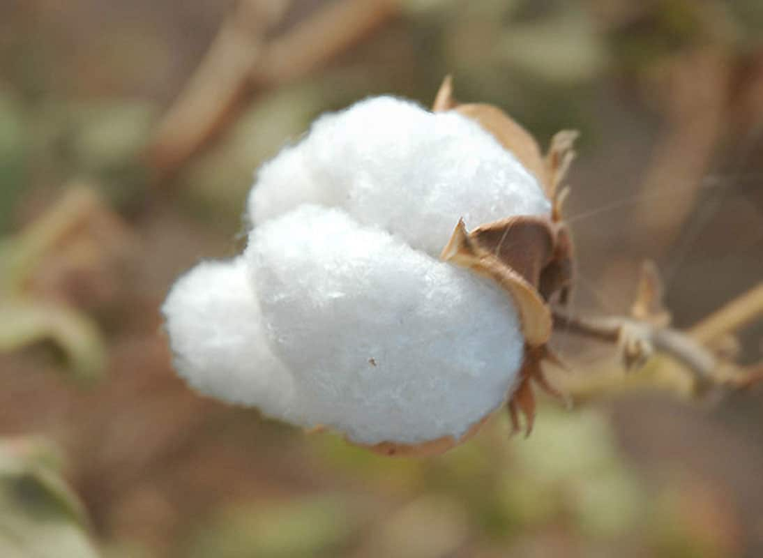Cotton équitable
